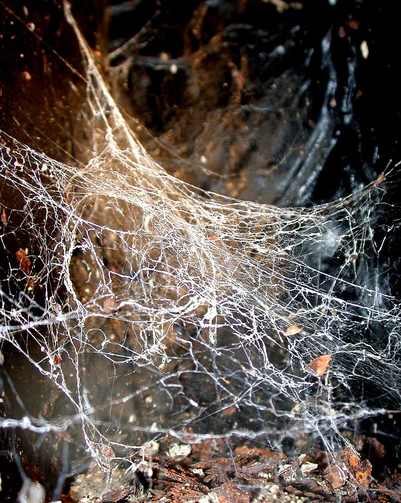 close-up-photo-of-white-spider-web